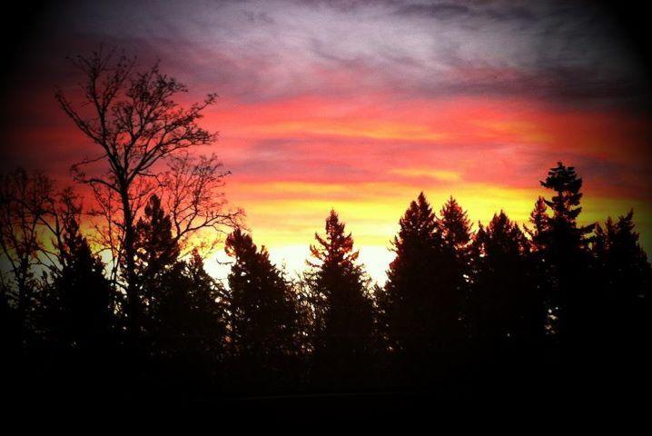 morning glories at dgi.jpg