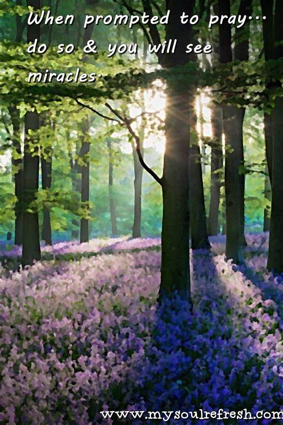 purple forest floor.jpg