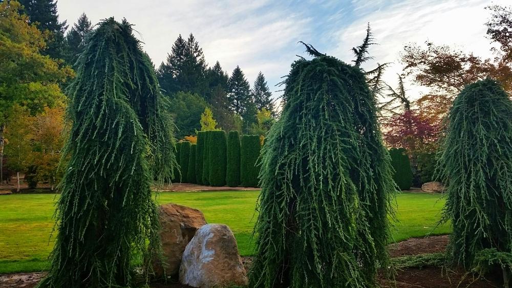 Specimen display gardens