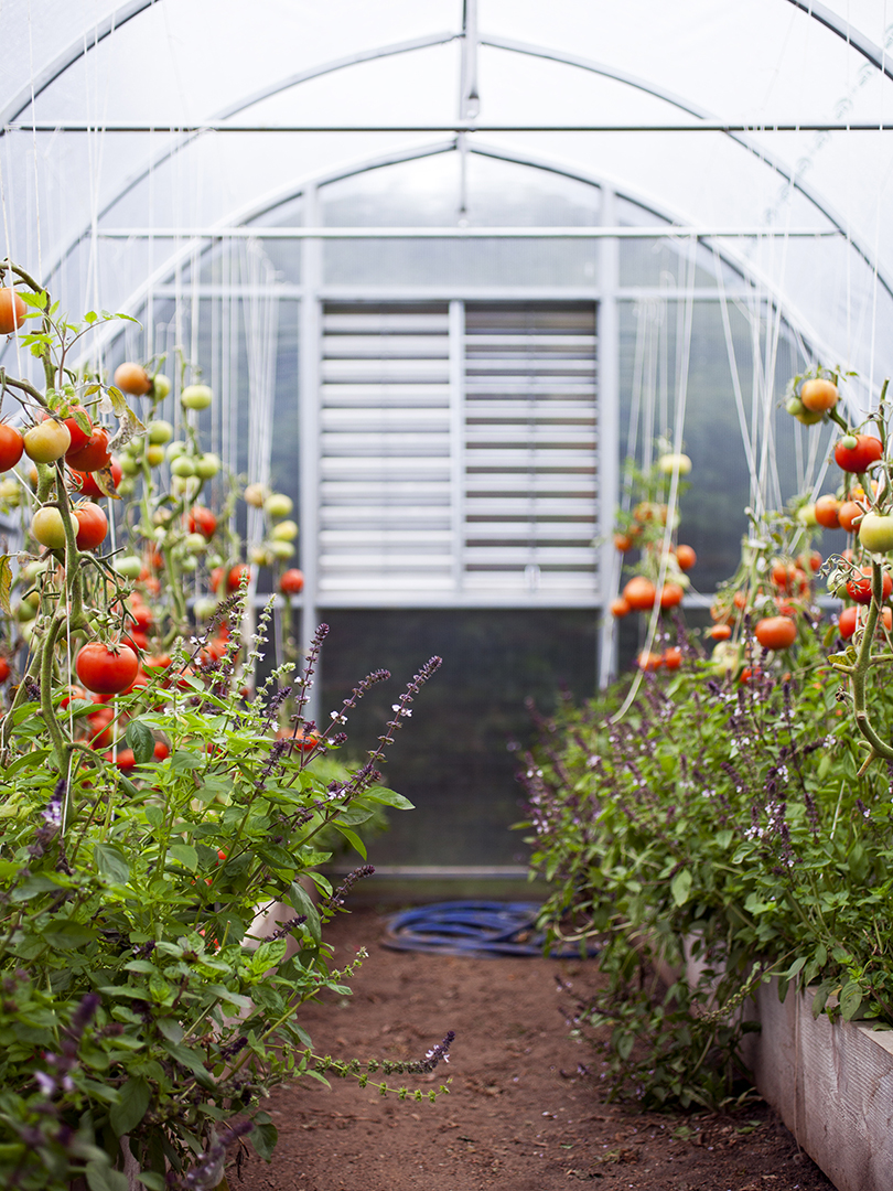Burggraaf_Charity-Seattle_Food_Photographer-Tomato_Garden-Willows_Inn_Lummi.jpg