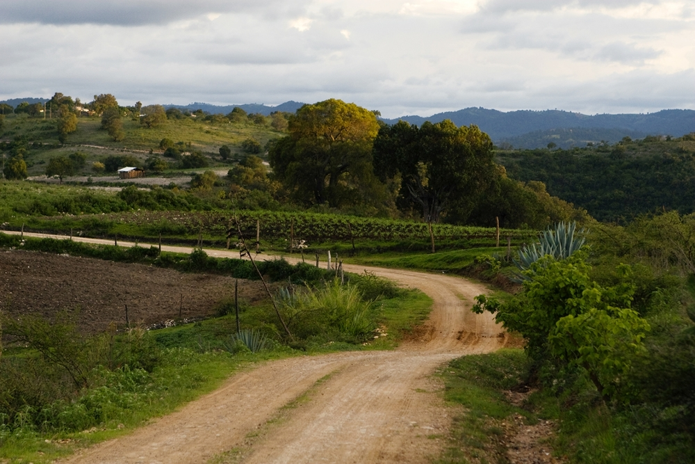 Burggraaf_Charity-Seattle_Travel_Photographer-Oaxaca_Farm.jpg