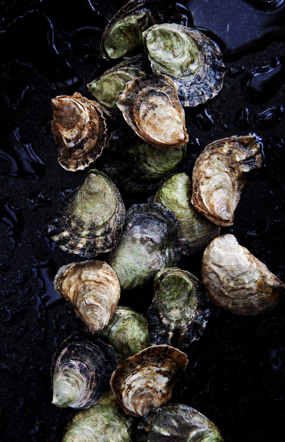 Burggraaf_Charity-Seattle_Food_Photographer-Olympia_Oysters-fresh.jpg