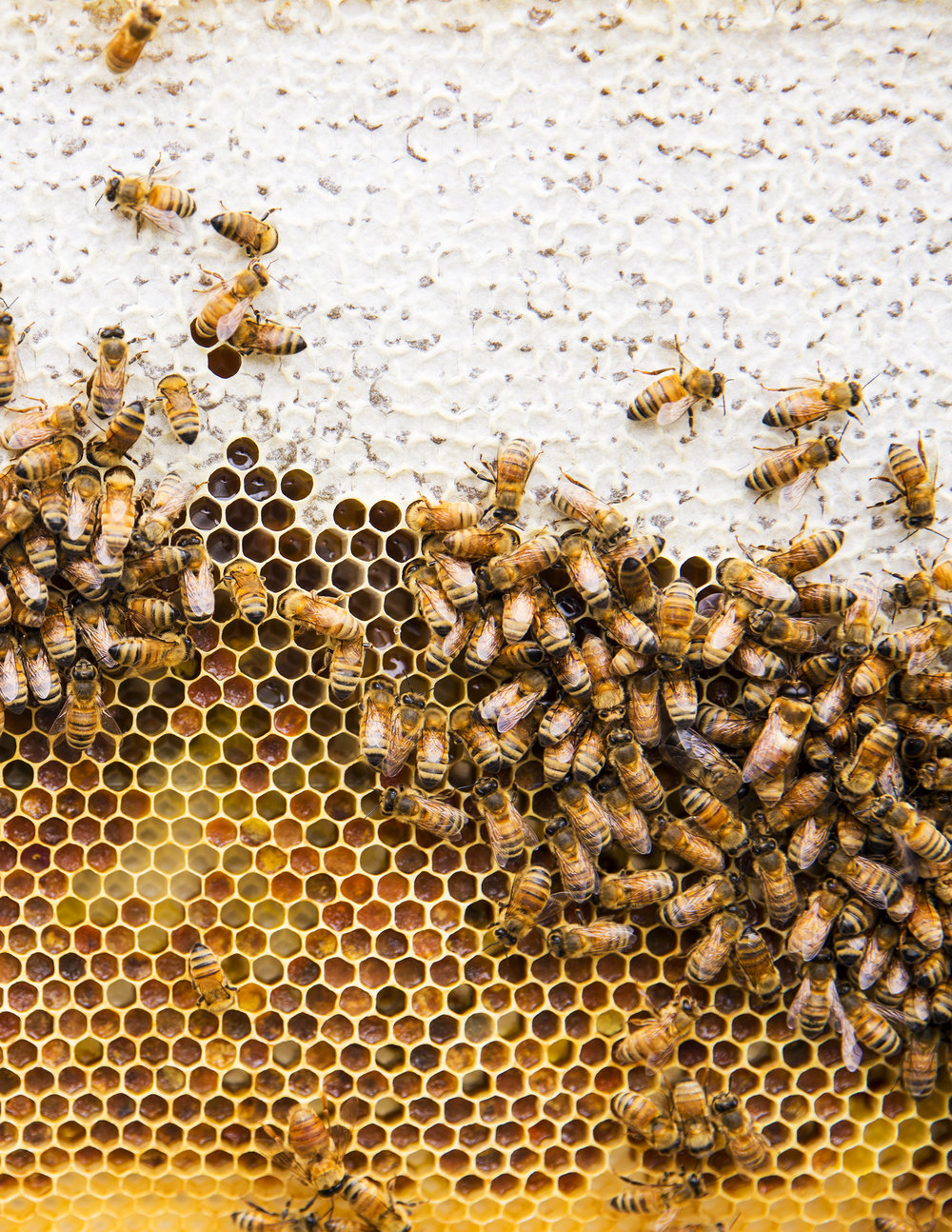 Burggraaf_Charity-Seattle_Food_Photographer-Beekeeping-Hive.jpg