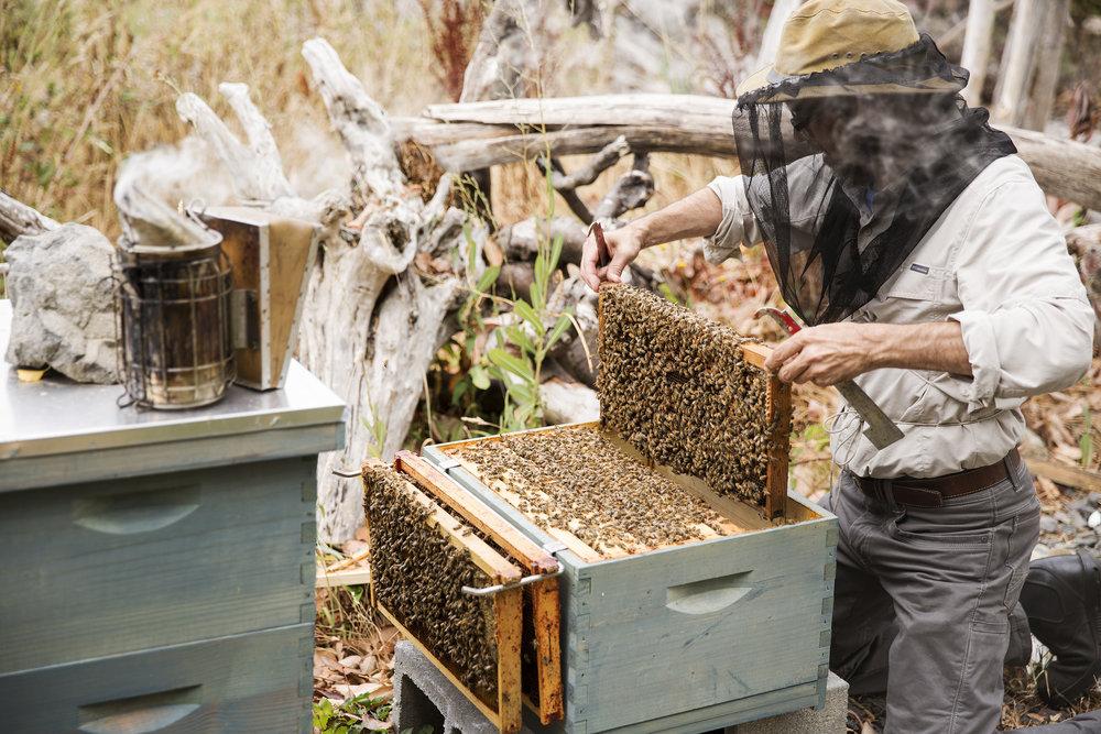 Burggraaf_Charity-Seattle_Food_Photographer-Beekeeping.jpg