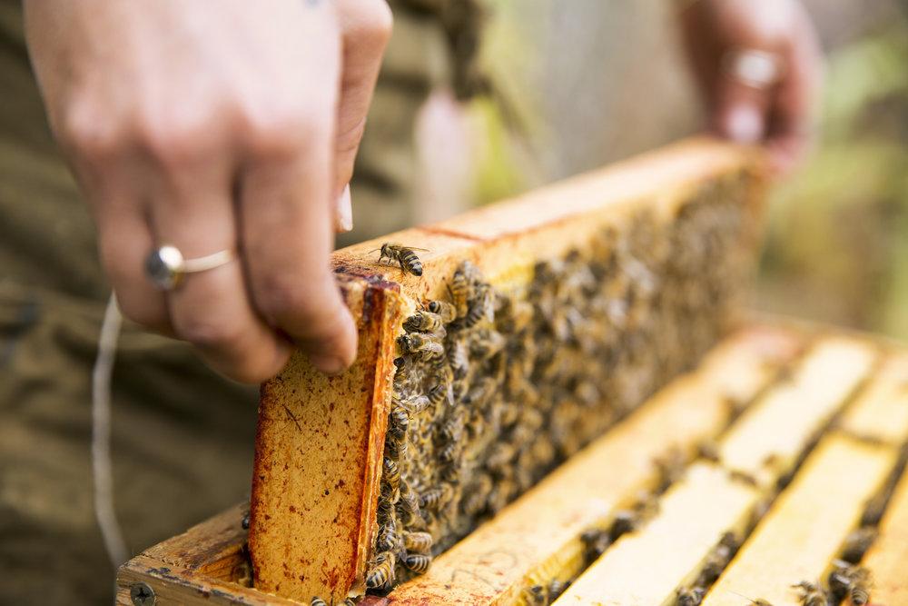 Burggraaf_Charity-Seattle_Food_Photographer-Beekeepers.jpg