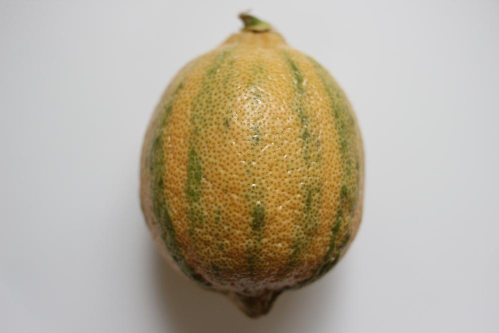 citron zebré