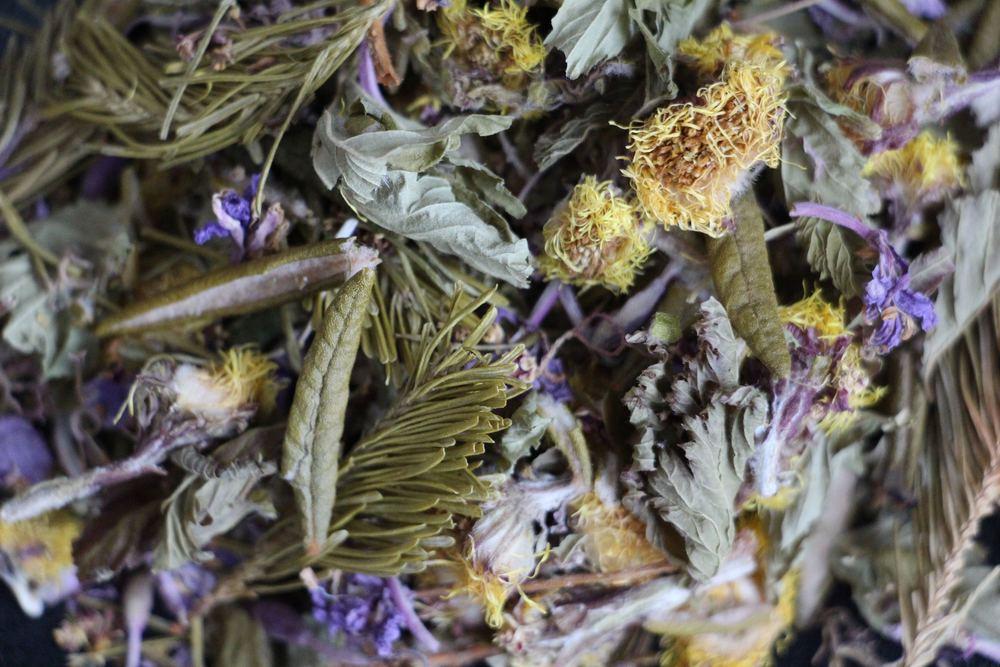 thé du Labrador herbes Gaspésie