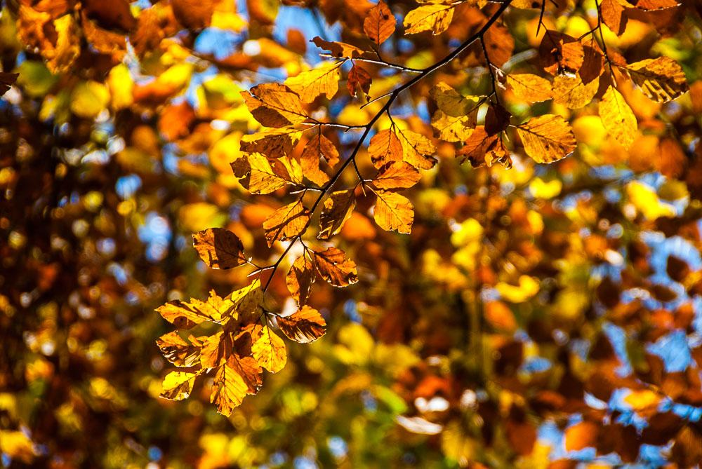 20121021_Morissolo_5055_df.jpg
