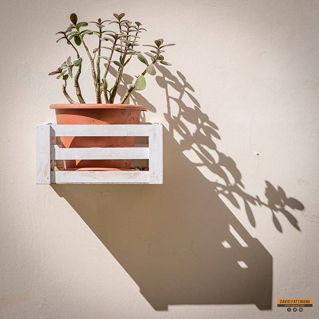 Shadow Pot