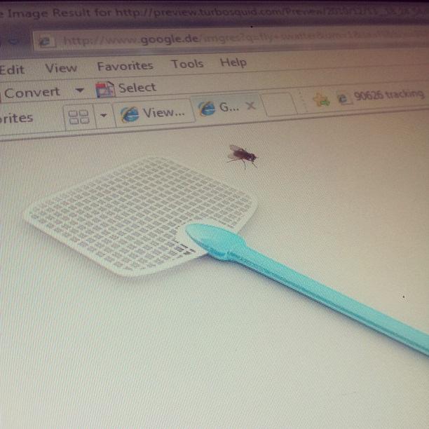 fly swatter.jpg