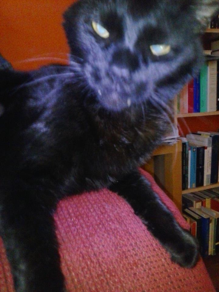 Vampire kitty!