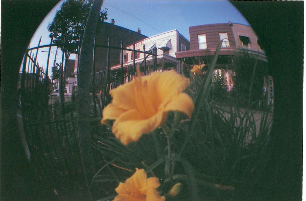 fisheye 2 9.jpg