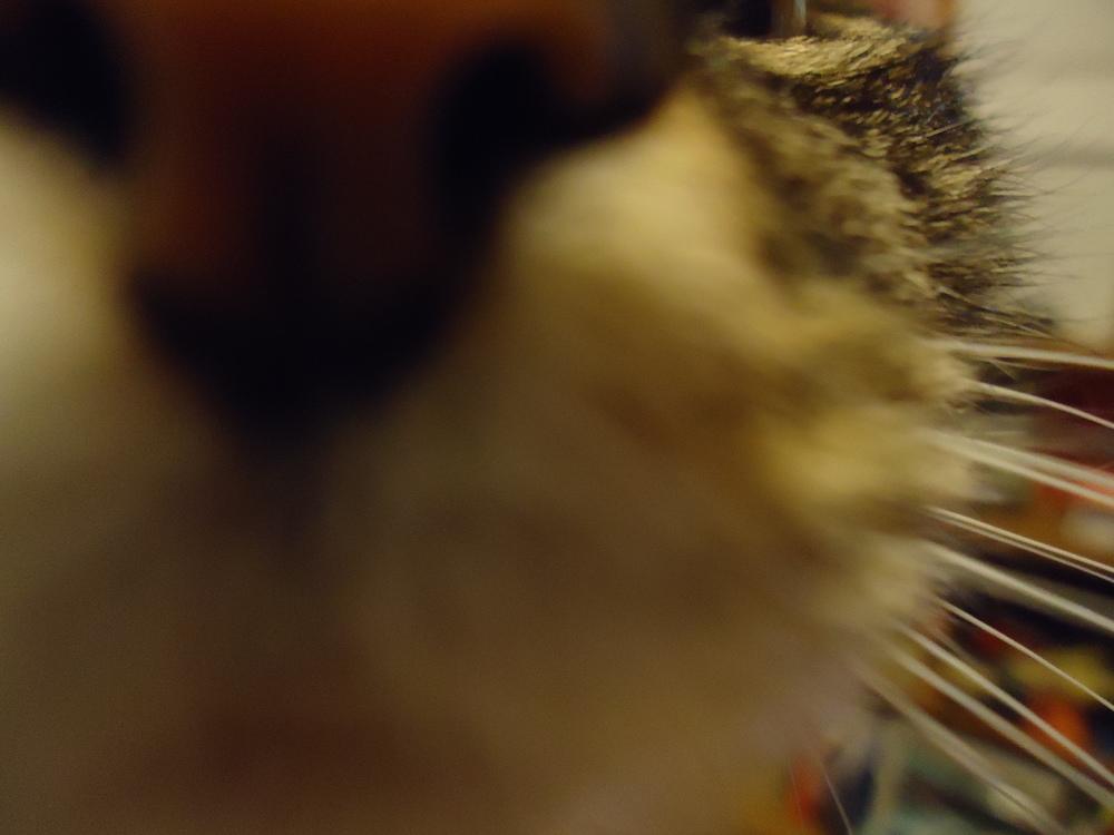 OMG CAT NOSE.
