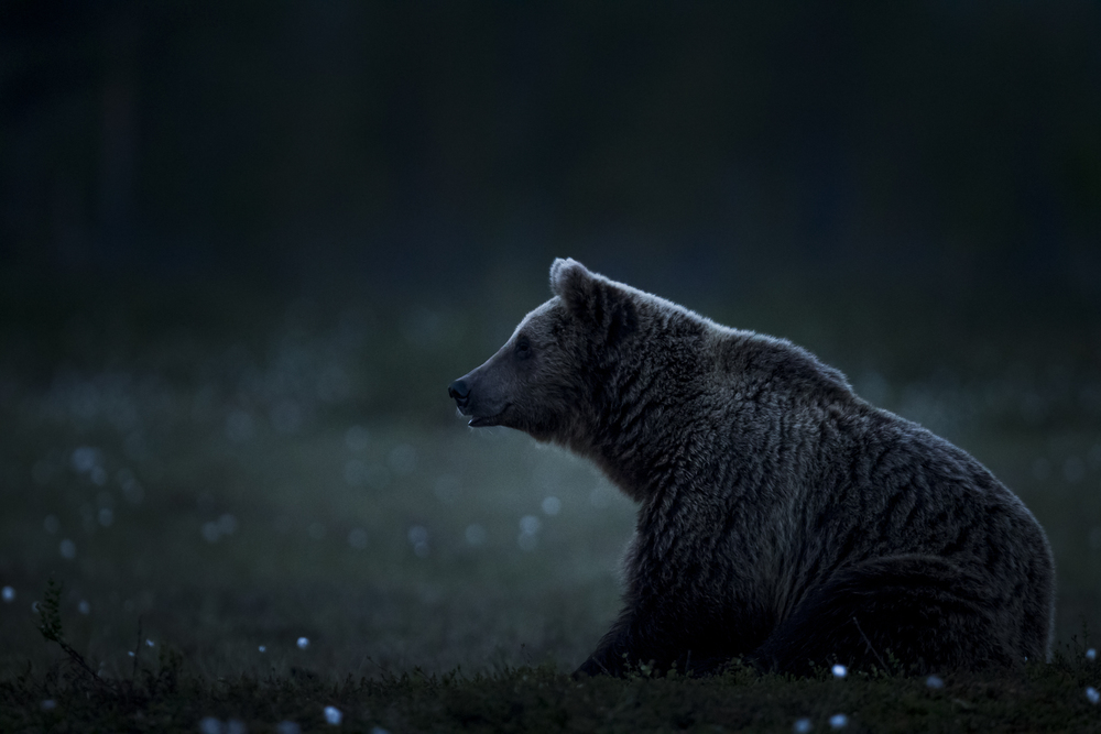 stephaneleroy_wild_finland_03.jpg