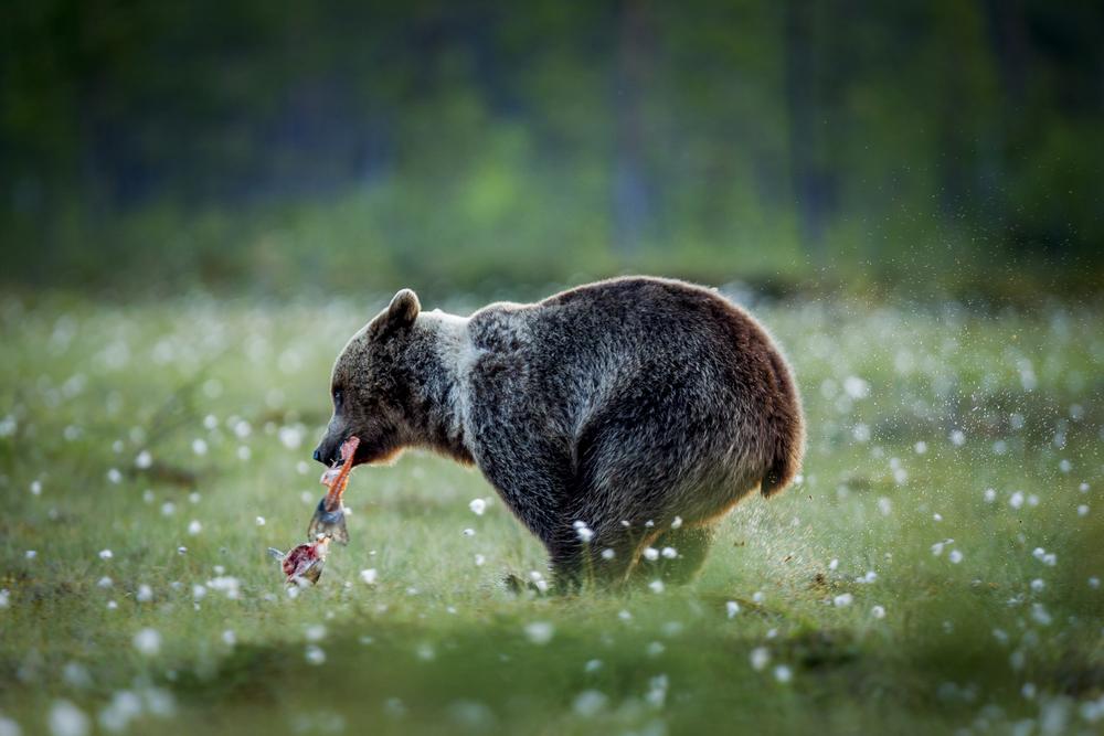 stephaneleroy_wild_finland-14.jpg