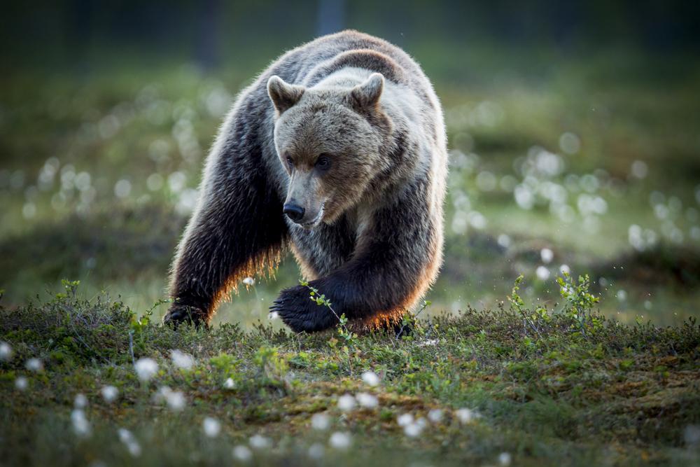 stephaneleroy_wild_finland-16.jpg