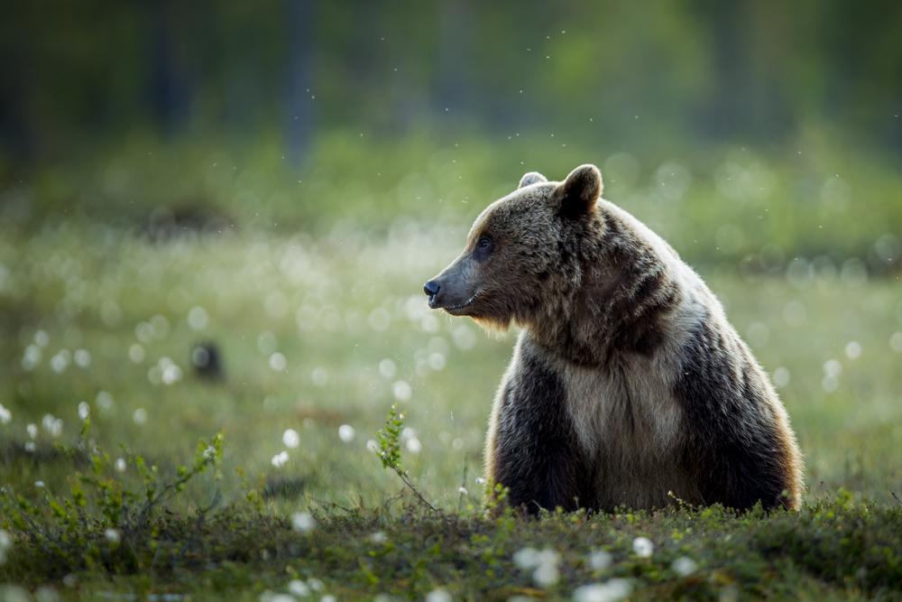 stephaneleroy_wild_finland-21.jpg