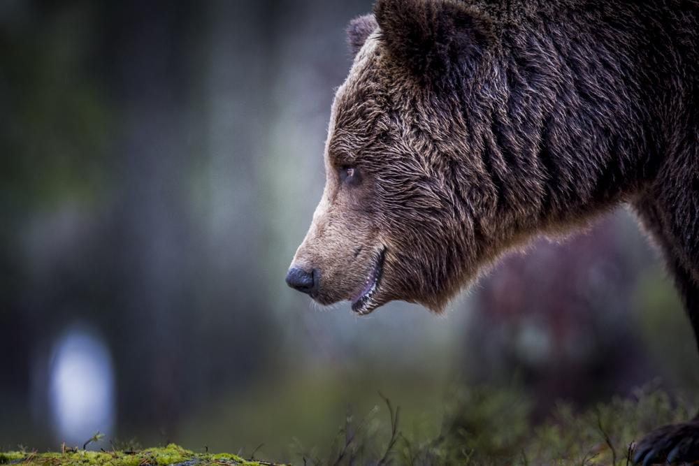 stephaneleroy_wild_finland-40.jpg