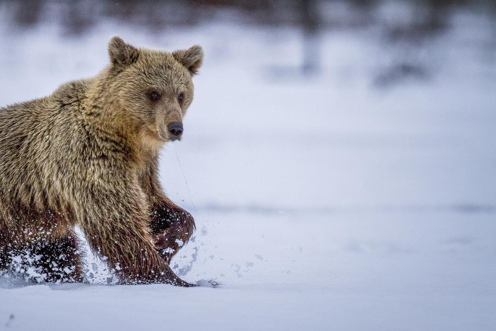 stephaneleroy_wild_finland-43.jpg