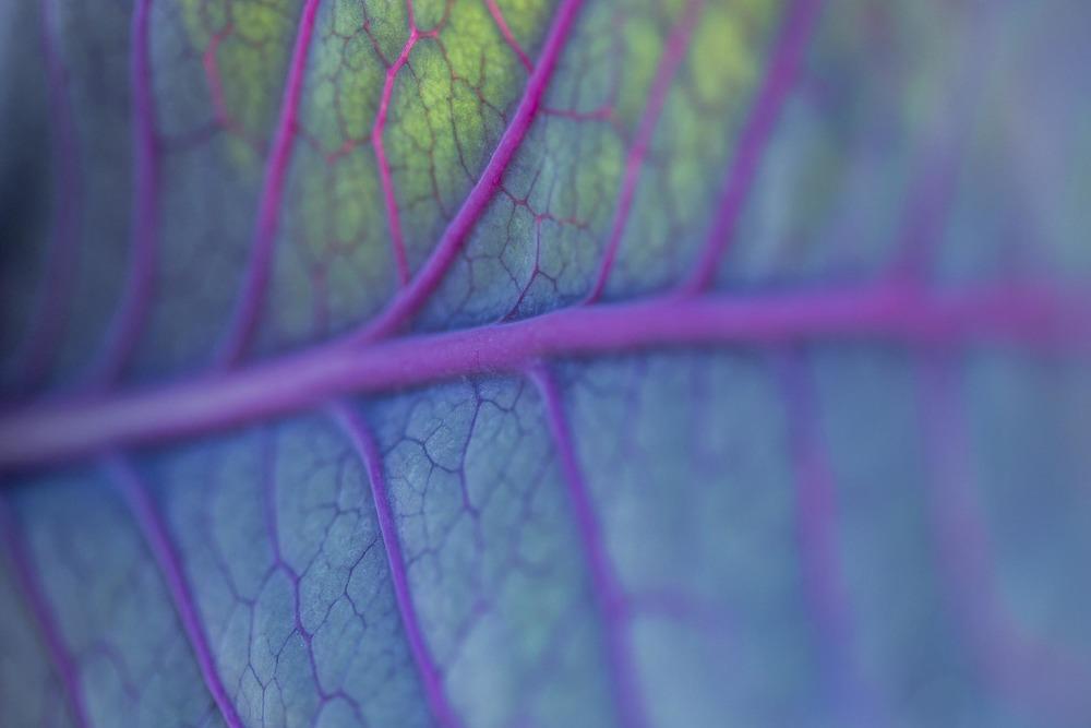 Photographie Potager Légume