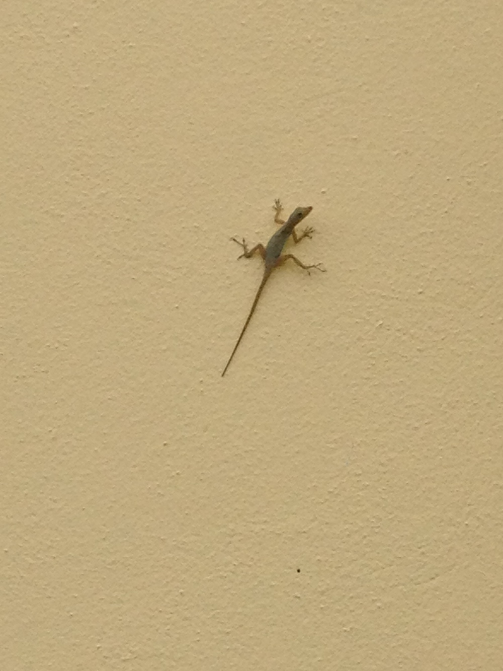 Lots o lizards around!