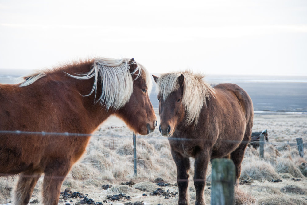 Iceland-0550.jpg
