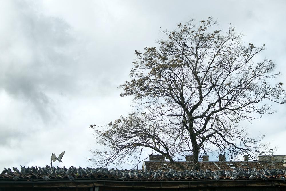 Pigeon Army, Sarajevo 2014