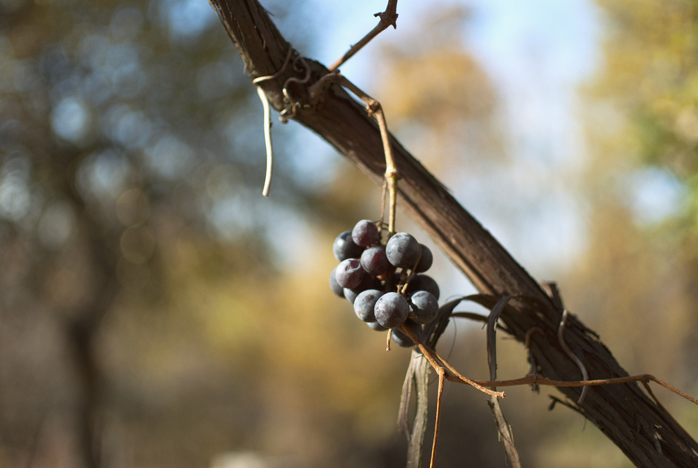 Grapes Found - November 2015