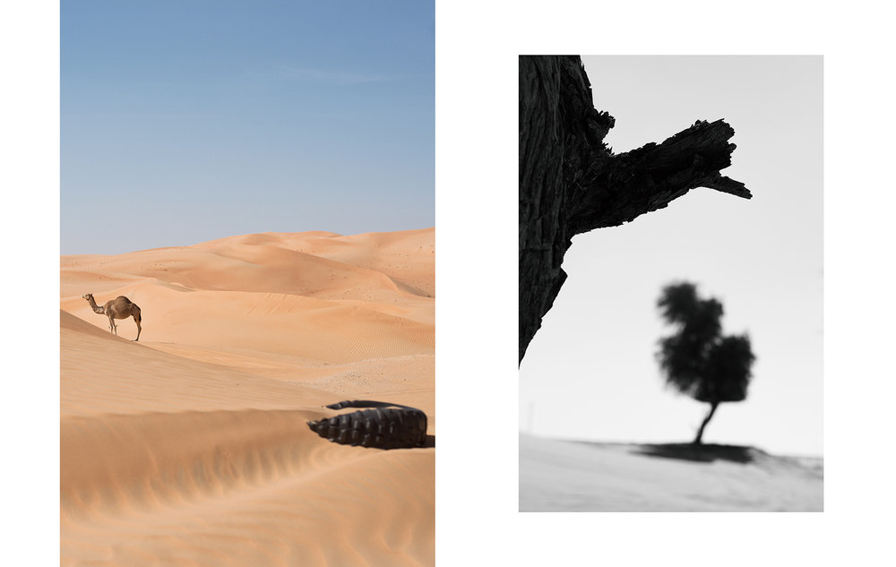 A camel and a tire - Abu Dhabi, 2016 // Ghaf trees - Abu Dhabi, 2016