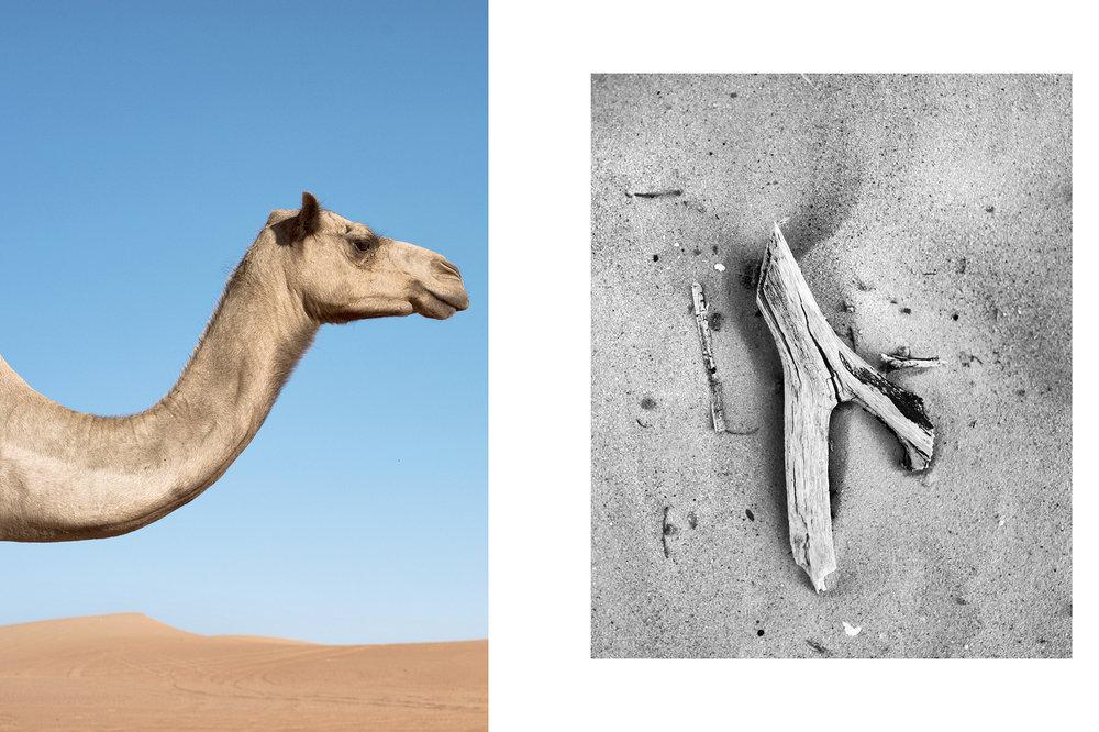 Elegant neck camel -Abu Dhabi, 2016 // A stick -Abu Dhabi, 2016
