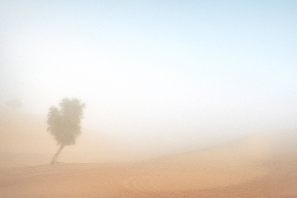 Morning fog - Abu Dhabi, 2016