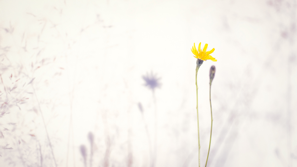 Flowerscape #3