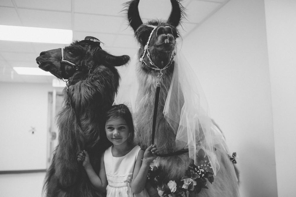 david + sarah | seattle wedding | arbr pictures-151-2.jpg