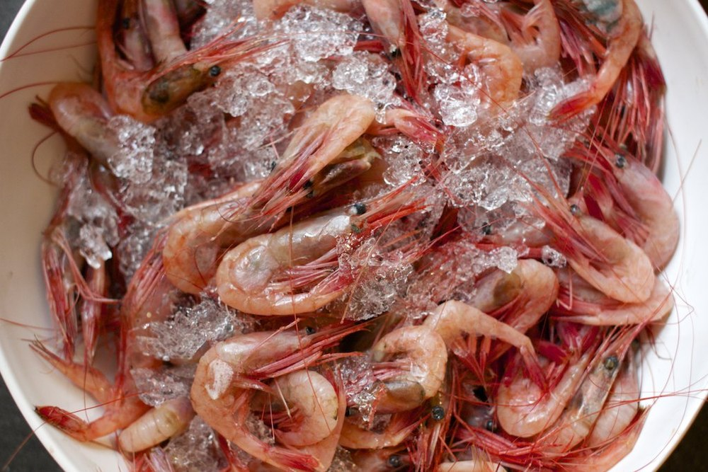 Chedebucto Shrimp 001.jpg