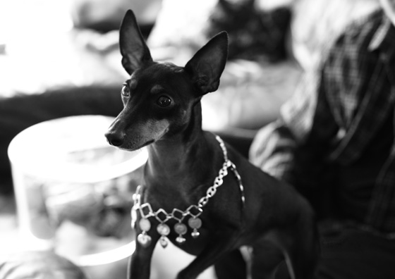 Sonny bejeweled