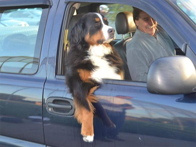dog-car4.jpg