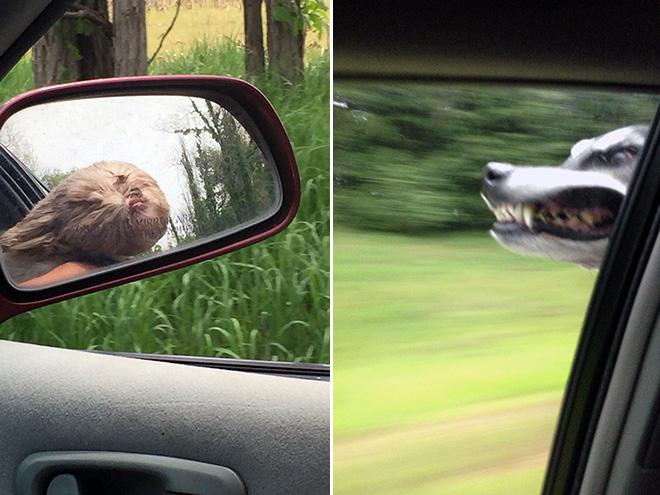 dog-car5.jpg