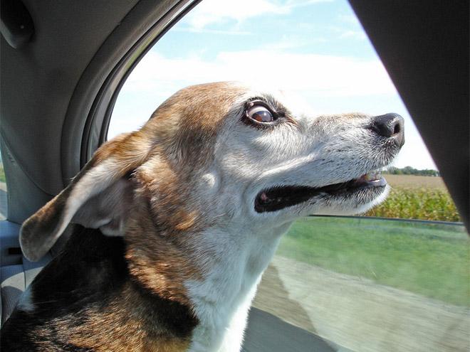 dog-car6.jpg