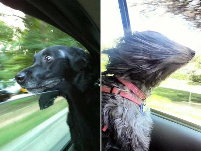 dog-car8.jpg