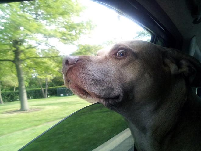 dog-car9.jpg