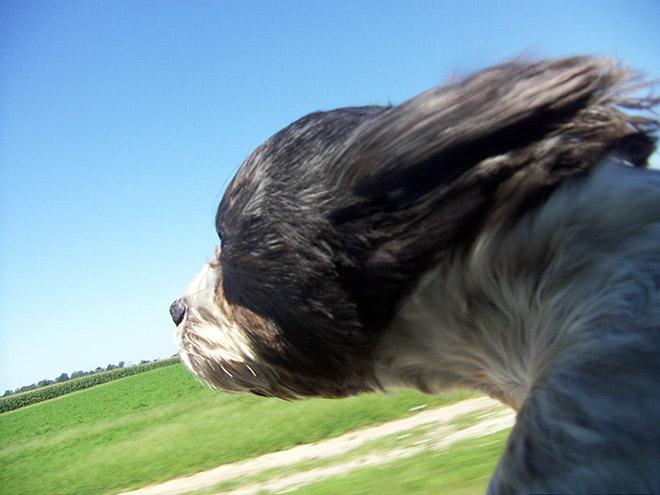 dog-car10.jpg