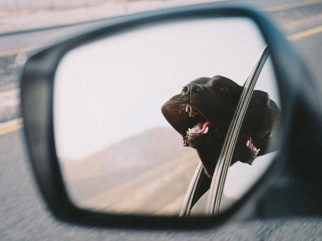 dog-car12.jpg