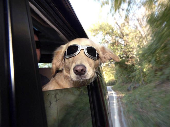 dog-car13.jpg