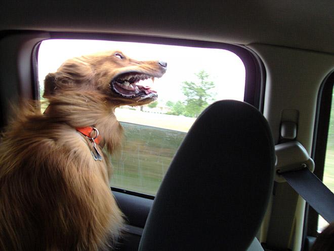 dog-car15.jpg