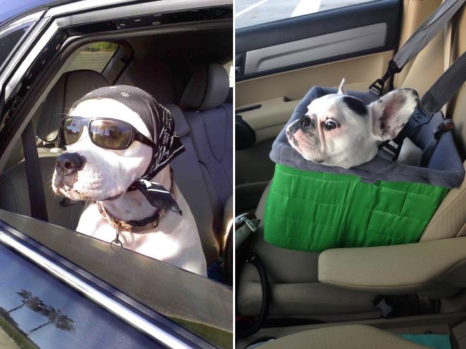 dog-car18.jpg