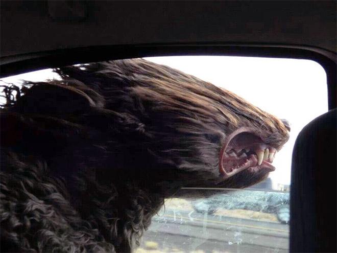 dog-car19.jpg