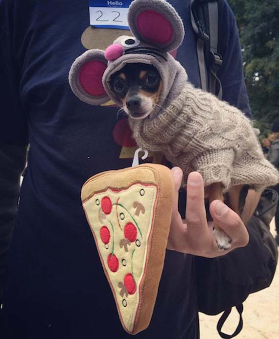 pizza-rat-dog-costume.jpg