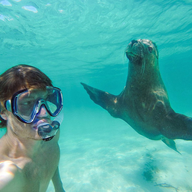 animal-selfie-seal.jpg