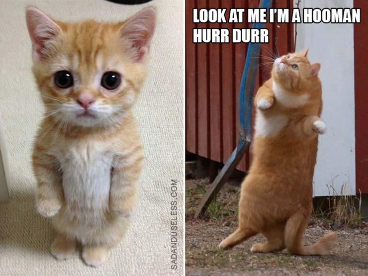 funny-standing-cat2.jpg