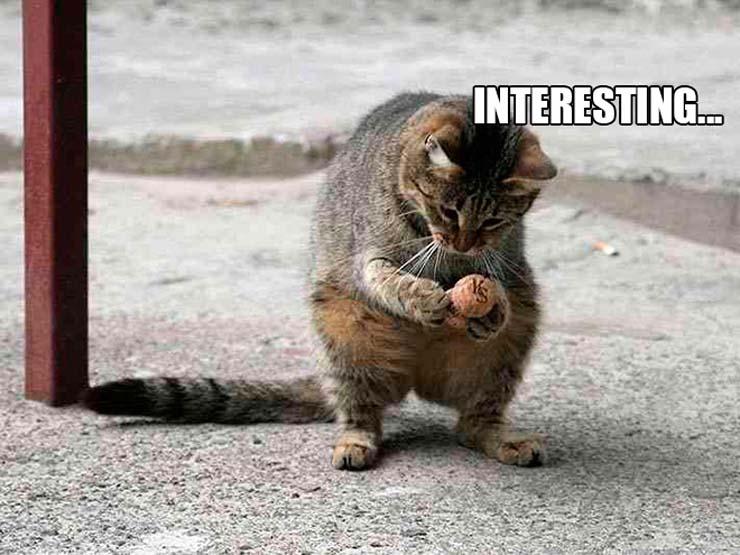 funny-standing-cat3.jpg